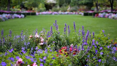 Learn about gardening mistakes people make
